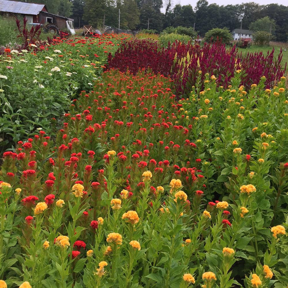 marybeth garden *.jpg