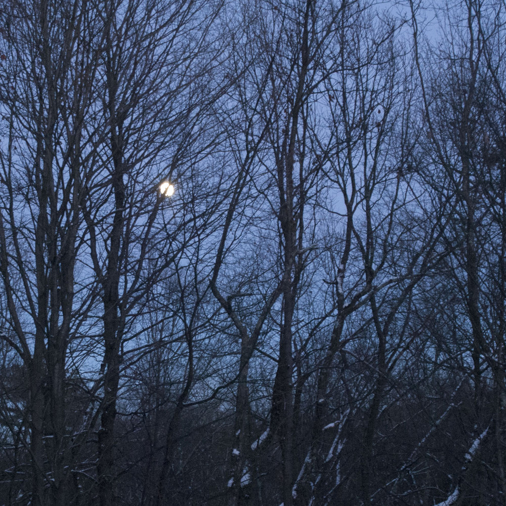 wolf moon_2.jpg