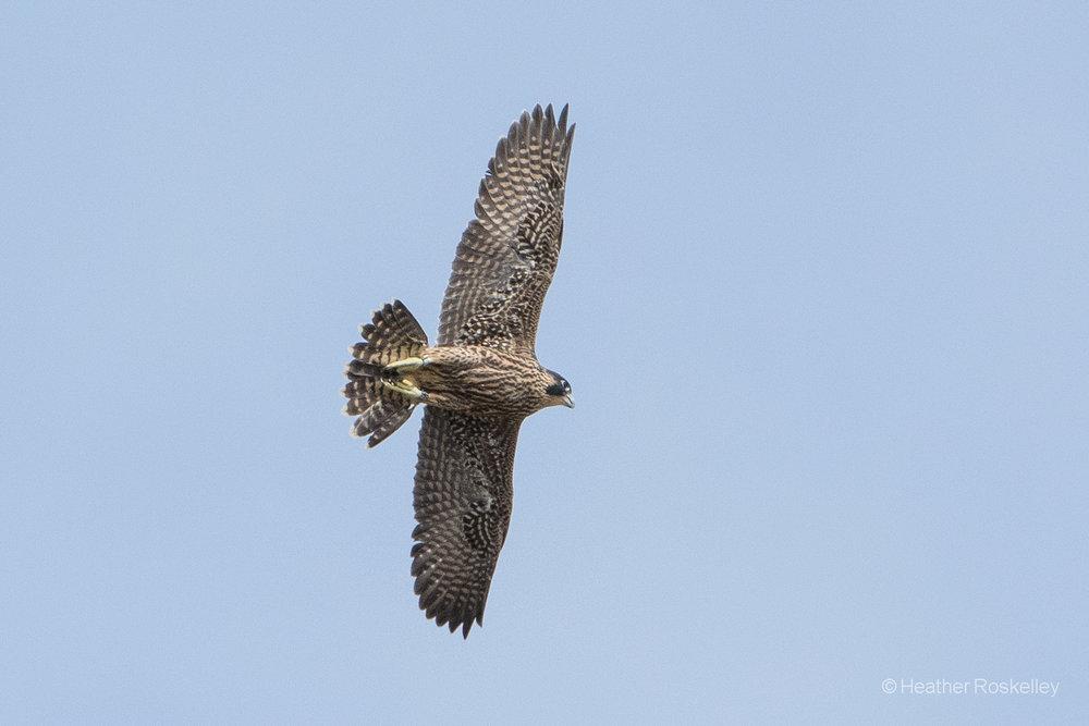 6-11-17---i-can-fly-i-can-fly-i-can-fly_35136584761_o.jpg