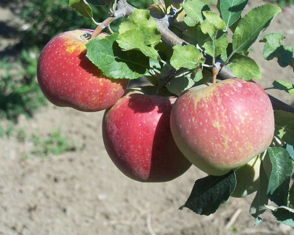 Order Apples