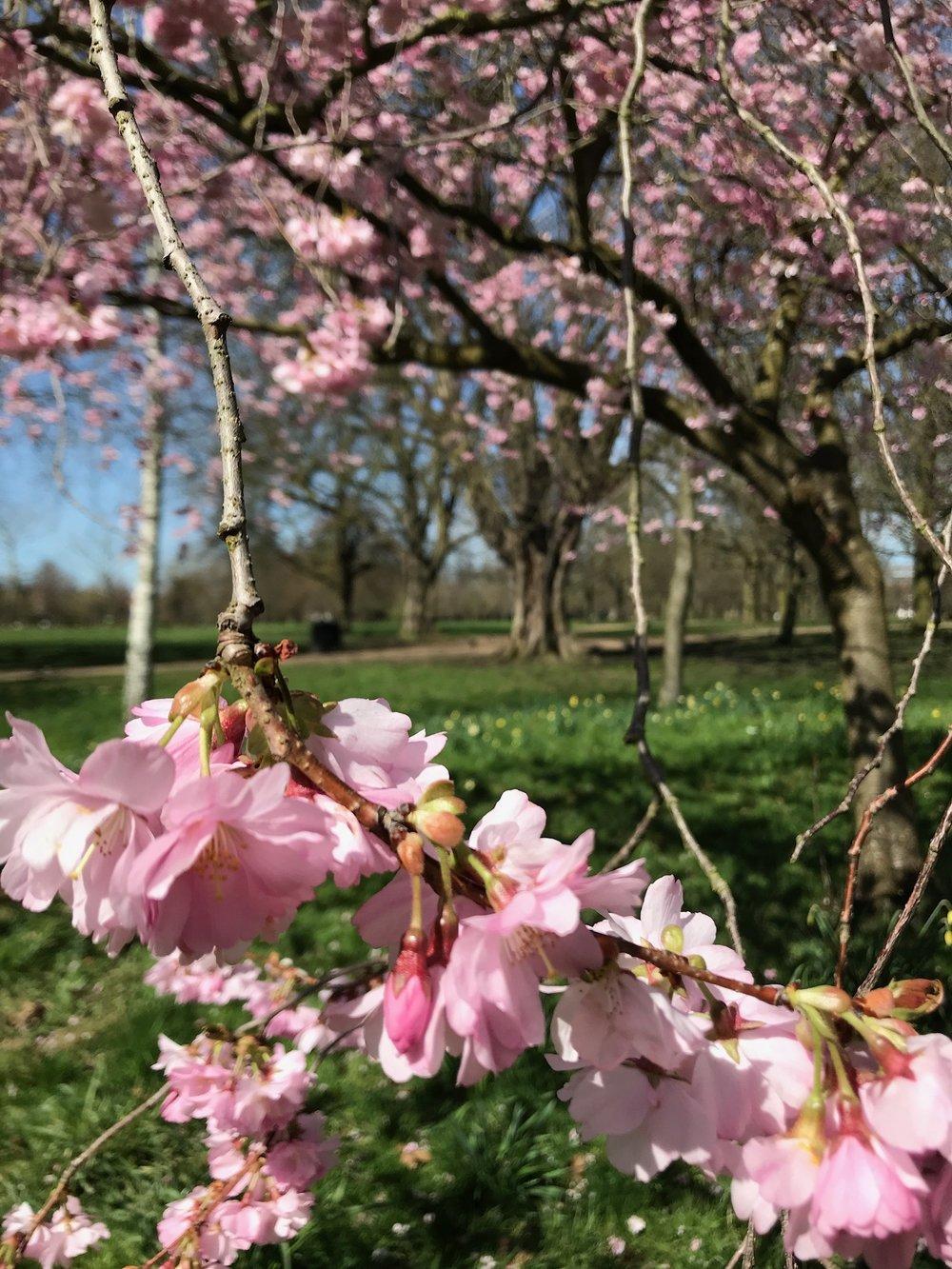 Spring in Walpole Park