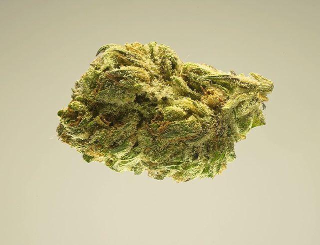 Blue diamond strain from @mattolefamilyfarms. A dense hybrid bud with an earthy aroma. 🍂🍁#responsiblecannabis #humboldtgrown #bluediamond #hybrid #cannabis #organiccannabis #weedstagram