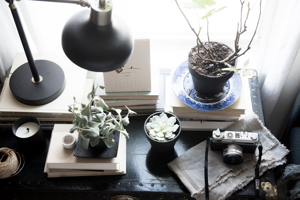 Succulents are irresistible and inexpensive. - and add an instant infusion of life to the space!
