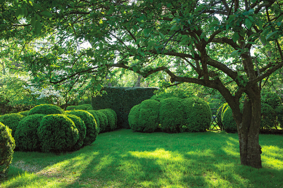 The Untamable Garden | Anna Wintour Garden