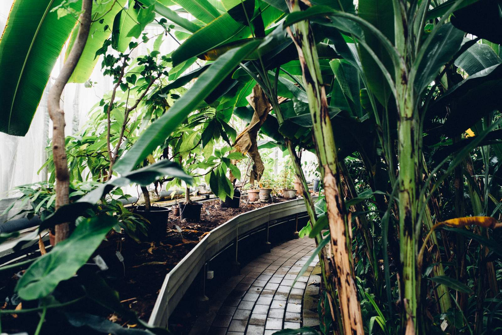 copenhagen-botanical-gardens-house-of-valentina-15