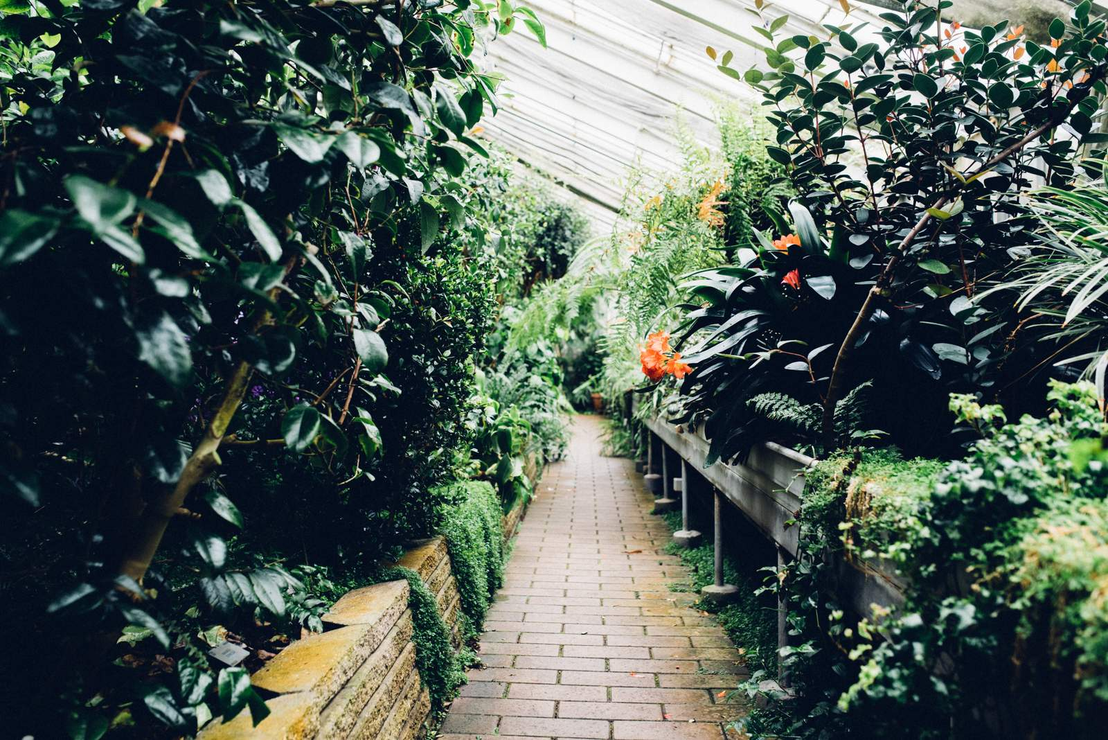 copenhagen-botanical-gardens-house-of-valentina-36