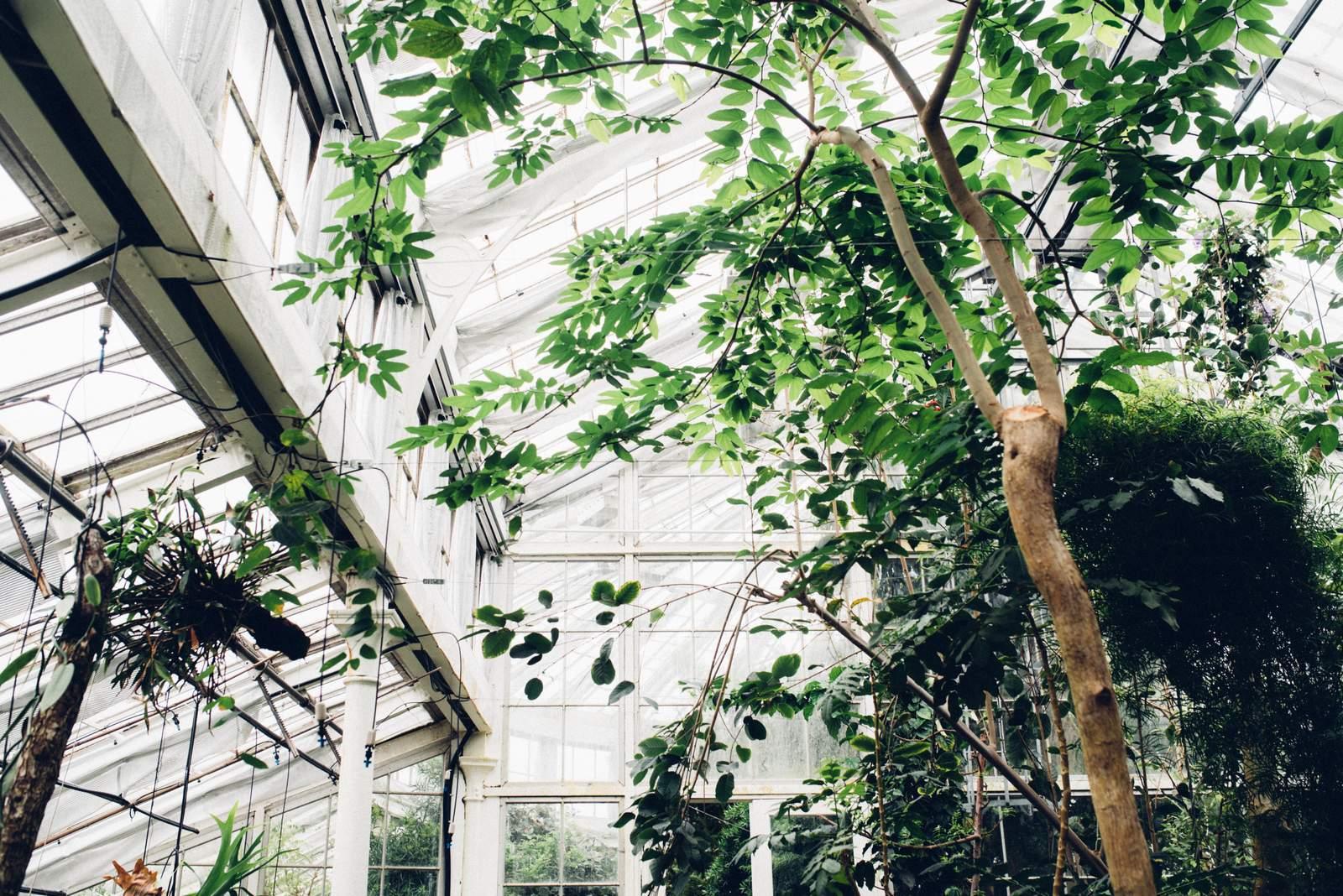 copenhagen-botanical-gardens-house-of-valentina-9