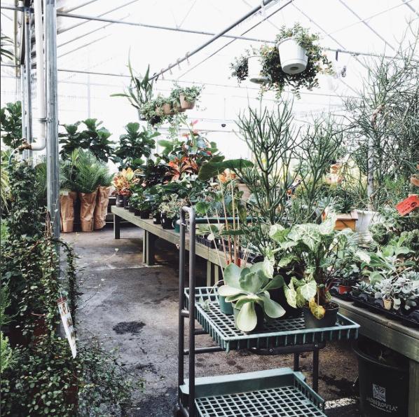 Plants :: House of Valentina