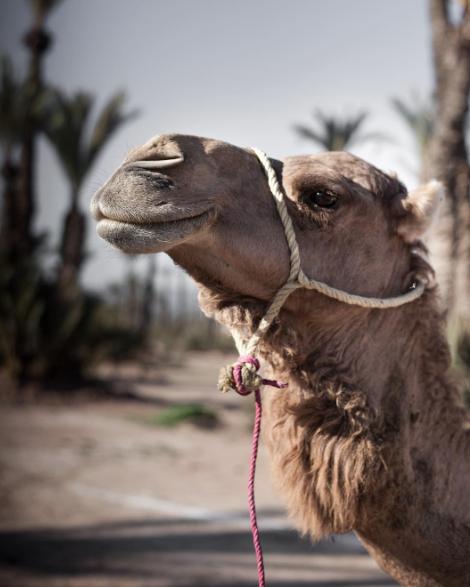 Hello, Camel