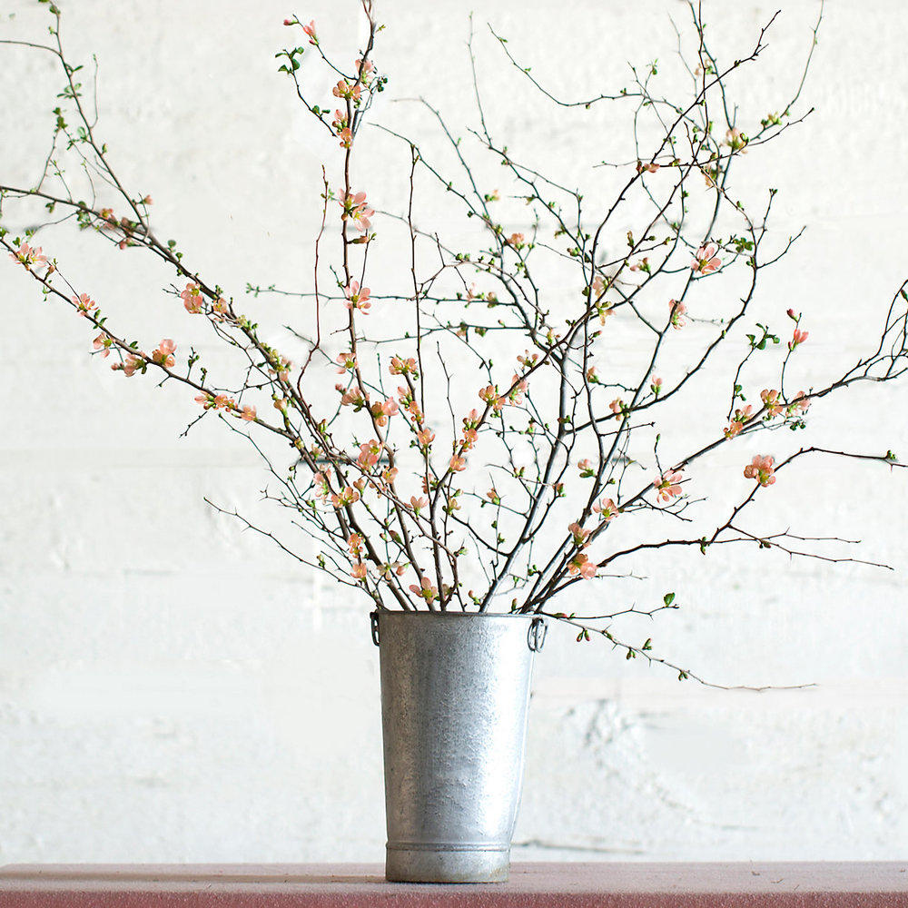 Quince Branches $58