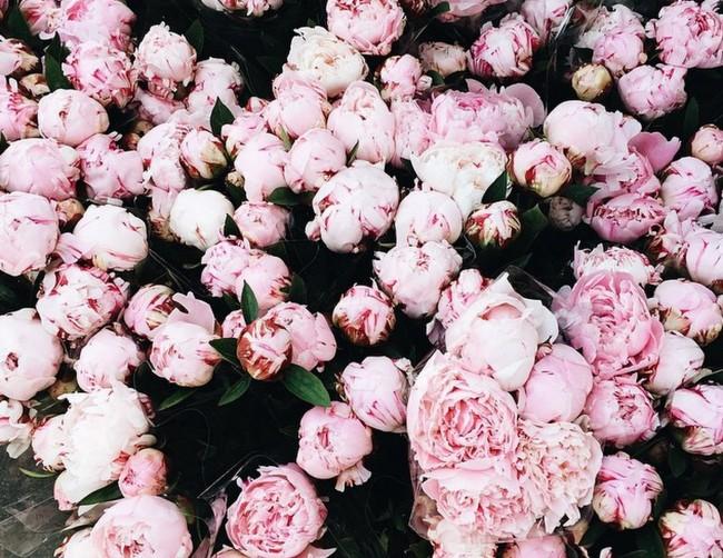 Florist Copenhagen -House of Valentina.jpg