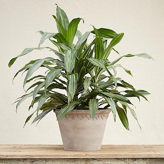 Planter $14