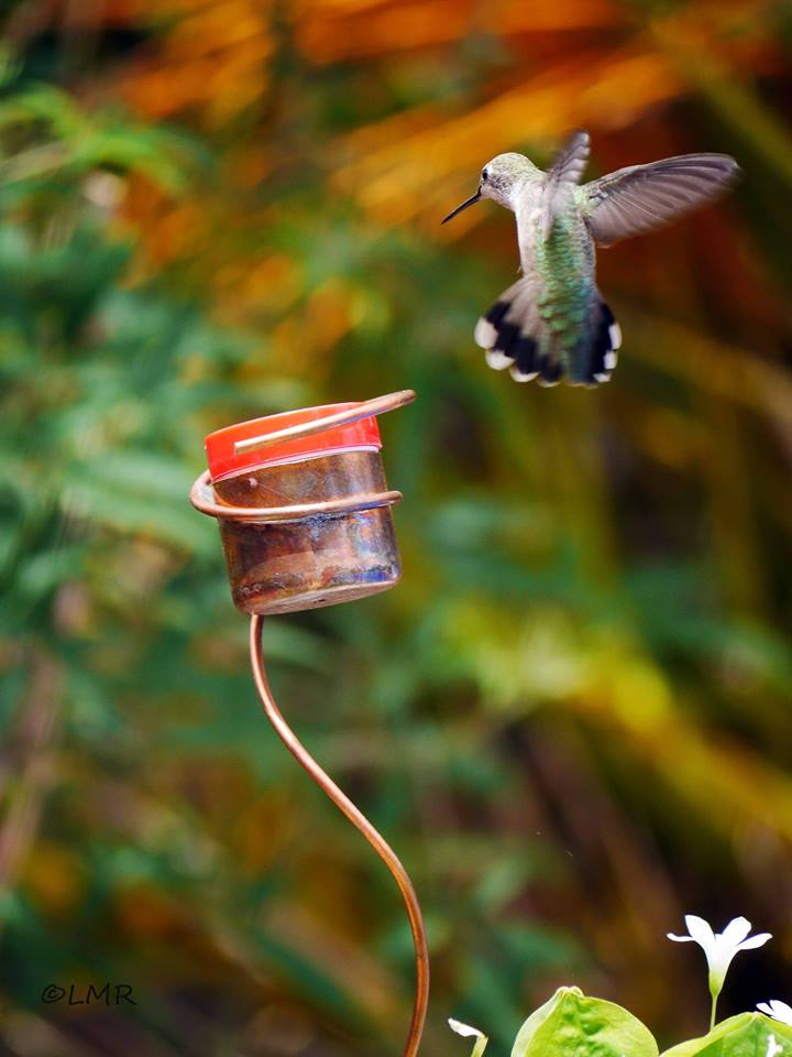 getdynamicimage with for feeder main htm height weather blossom mini image handmade bird flower wind path hanging hook feeders width hummingbird