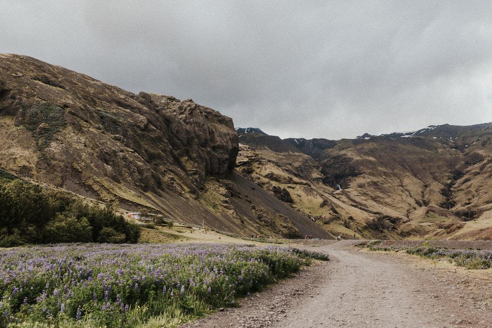 Icelandic landscape with wildflowers.jpg