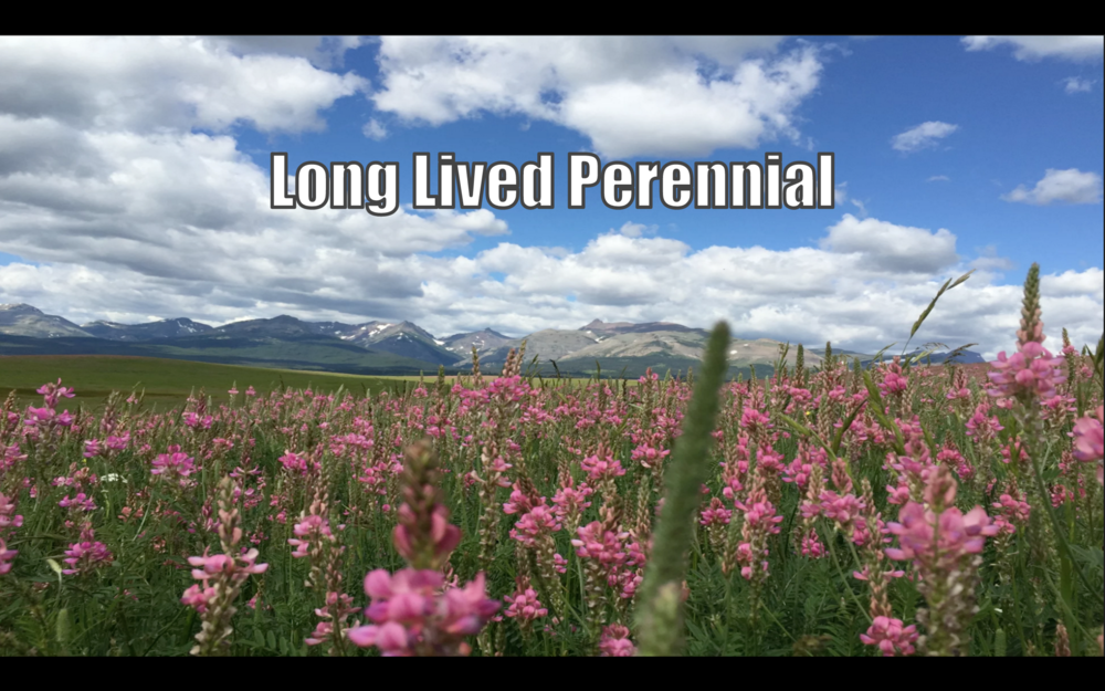 About Montana Seeds
