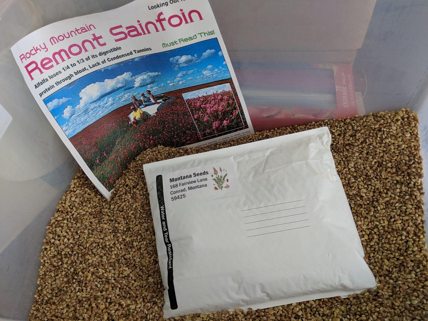 3 Pounds Sainfoin Seed Covers About 3000 Sq Ft Montana Seeds