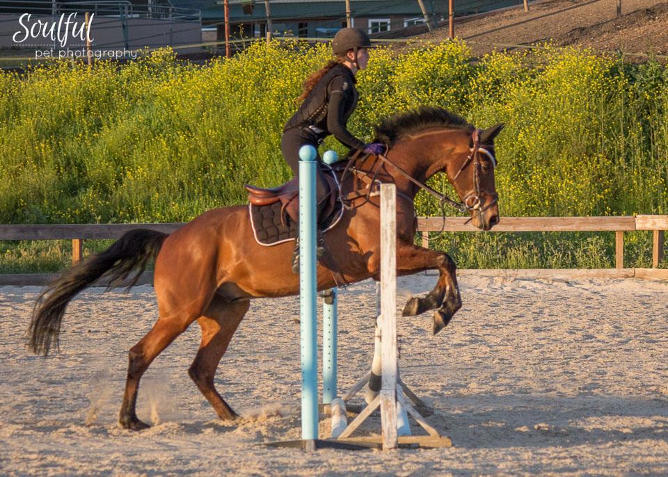 Horses 07 v2.jpg