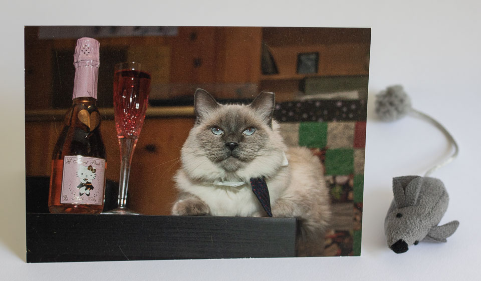 Holiday Card 2015.jpg