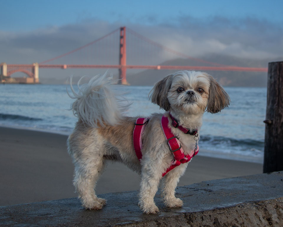 Dog Book Fundraiser - Thanks for responding to our Facebook post!WANTED: AMAZING BAY AREA DOGS: Looking for dogs to be photographed to raise money for PALS East Bay vaccine clinics.Pipi Ray Diamond of Soulful Pet Photography is helping to raise $2,500 for the PALS East Bay monthly vaccine clinics.Please read the FAQS below. To register for a dog photography session, CLICK HEREFREQUENTLY ASKED QUESTIONSHow much does this cost?The participation fee of $50 will go to PALS East Bay, a non-profit that hosts monthly vaccine clinics for dogs & cats. $50 will pay for a large litter of puppies or kittens to get their first round of vaccine shots.Is the book included in the participation fee?No, you will need to purchase the book separately which will cost approximately $60 depending on the number of pages and dogs included.Will there be an opportunity to buy prints?Yes, we will make a time for you to view the photographs taken and give you the opportunity to purchase any of the prints. There is no obligation to purchase and you can decide after you see the final images.Is my dog guaranteed to be in the book?Yes, every participant that pays the donation is guaranteed to have a page in the book.When will the book be published?We are hoping to launch the book in April 2019.How do I apply for my dog to be included?To register for a dog photography session, CLICK HERE