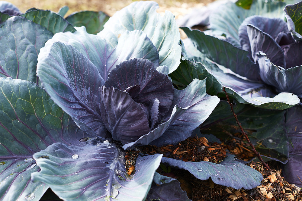 park-street-carlton-north-cafe-cabbage.png