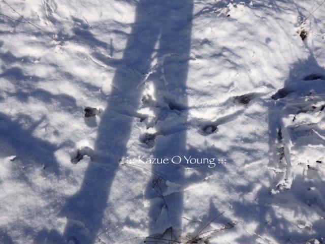 coyote & snow