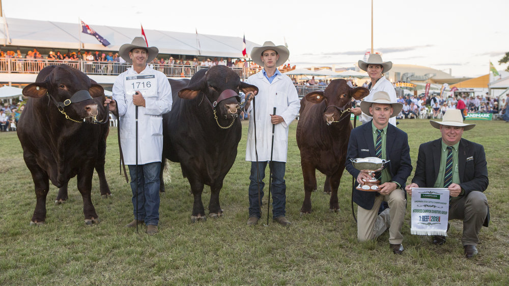 BEEF AUSTRALIA 2018 INTERBREED EXHIBITORS GROUP CHAMPION : WACO SANTA GERTRUDIS (GROUP INCLUDED WACO MASSI, WACO MUSTANG & WACO NIKITA)