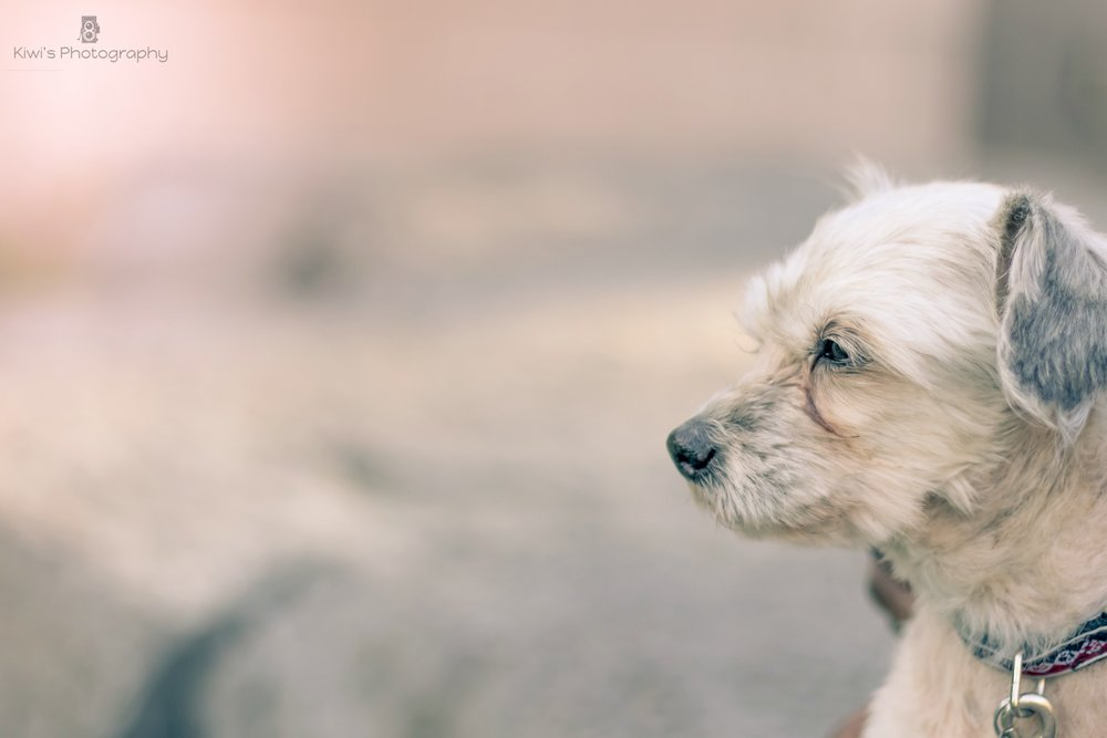 Freedom Dog Rescue Ottawa