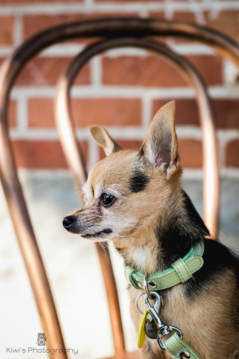 Dog Friendly Cafe in Ottawa: Union Street Kitchen Cafe