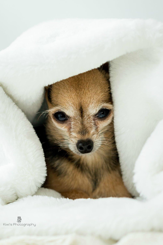 Diva Nina Sacs de transport et accessoires pour chiens