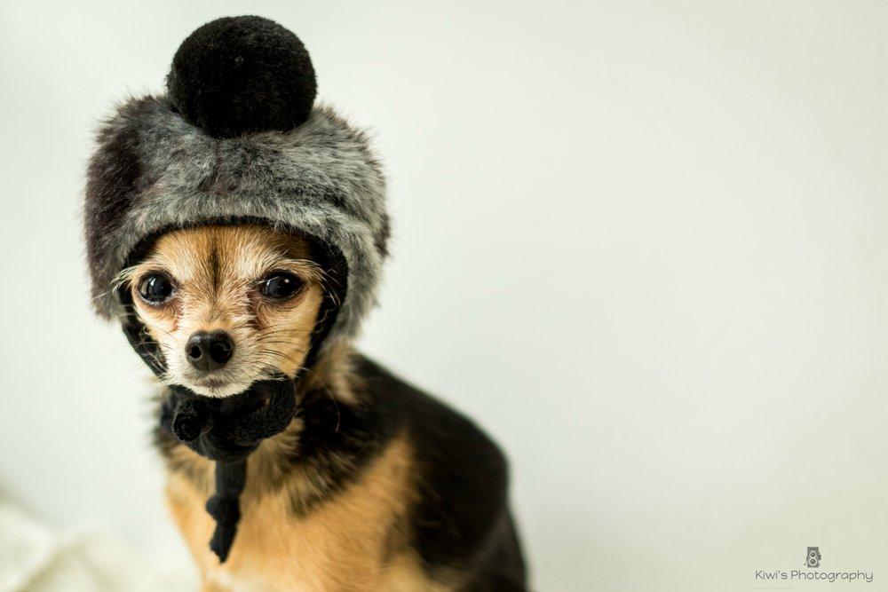 Diva Nina Sacs de transport et accessoires pour chiens - Winter Hat, 20$