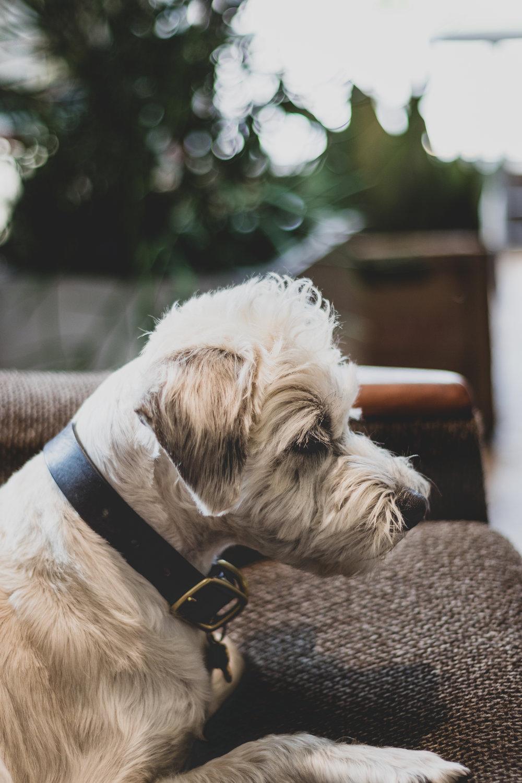 Dog Friendly Ottawa: Blumenstudio