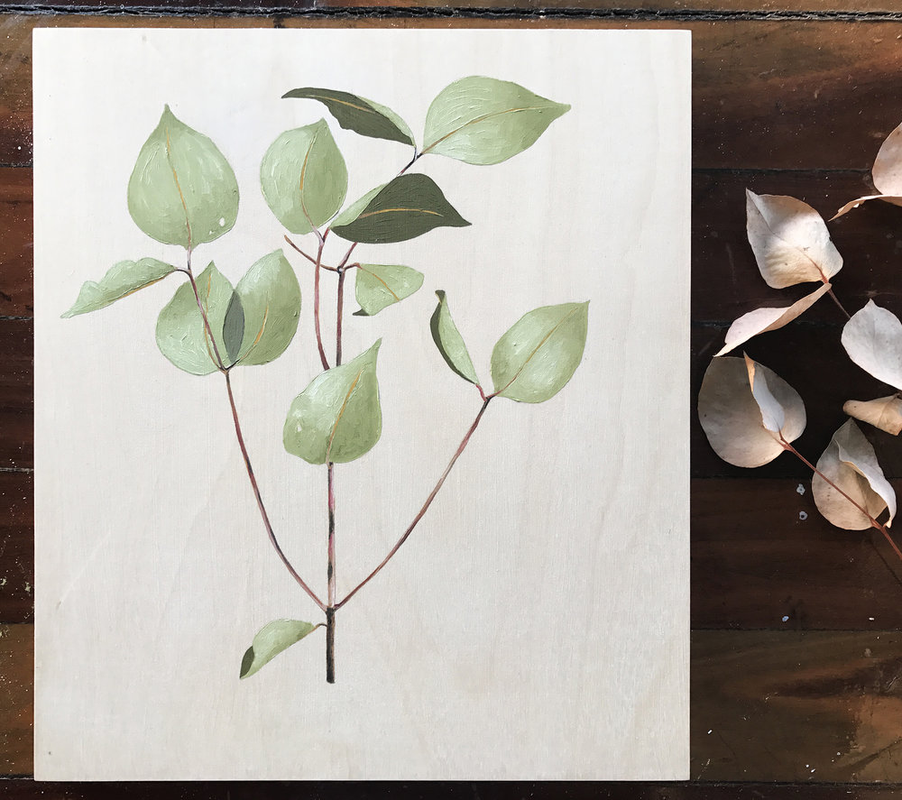 Juvenile bush eucalyptus sprig