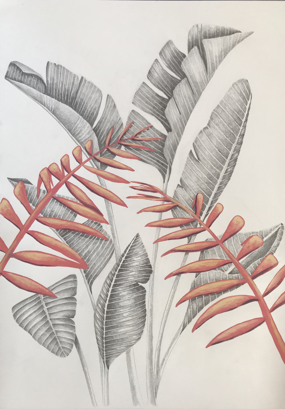 Strelitzia Palm Pink
