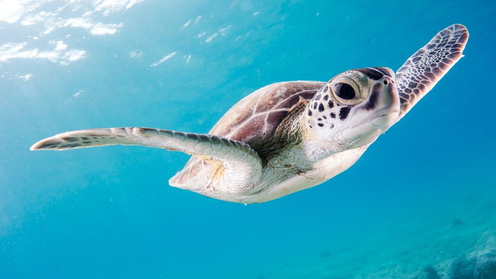 turtle plastic straw.jpg