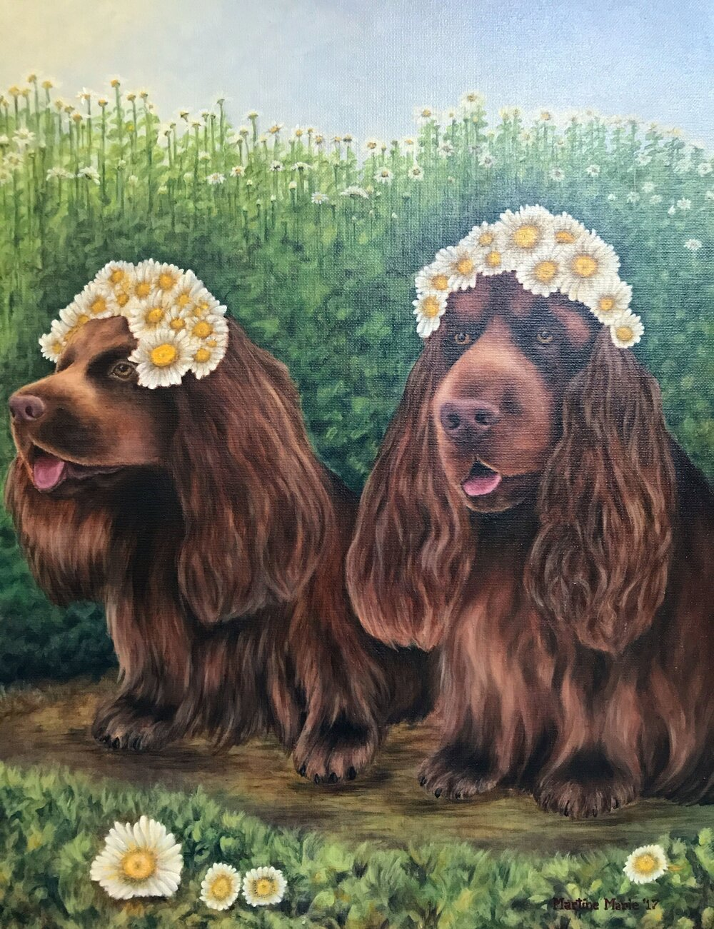 Daisy.Dogs Sussex.Spaniels 16x20.JPG