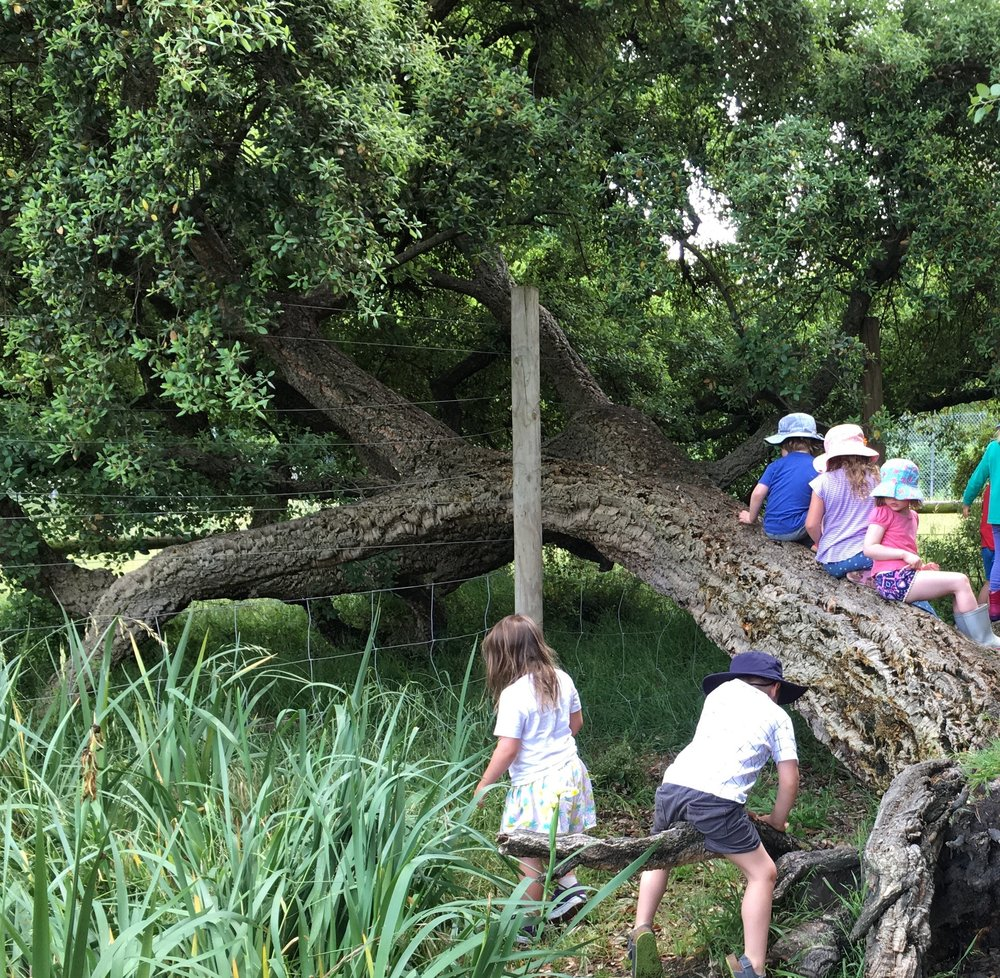 Climbing old fallen cork oak tree.jpg
