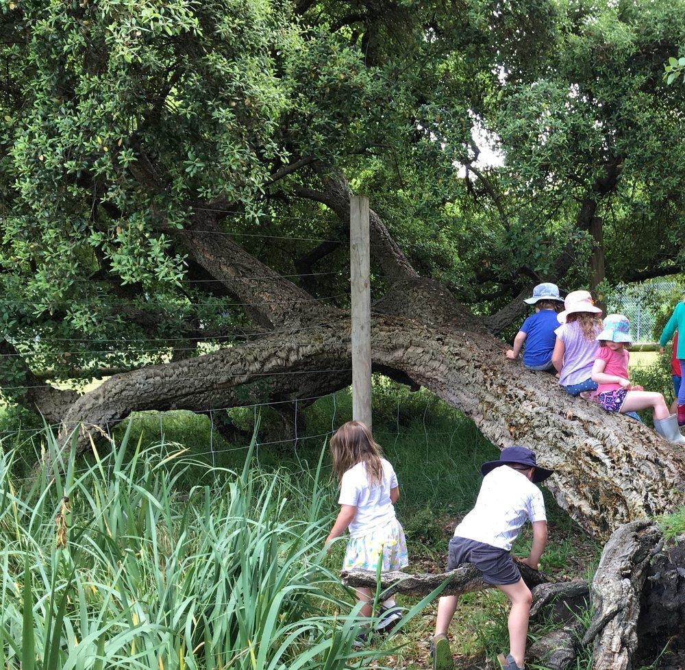 Climbing old fallen cork oak tree.jpg