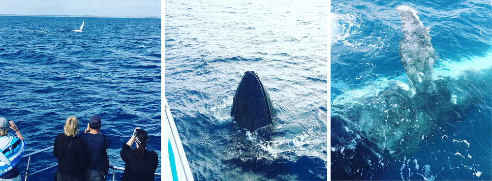 The whales and Hervey Bay