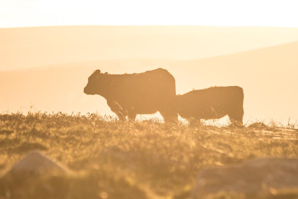 Dartmoor LR (1 of 3).jpg