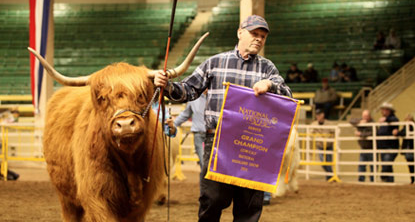 Shat Acres Cinnamon Raisin and Ray leaving as Grand Champion, 2015 National Western Stock Show, Denver, CO.