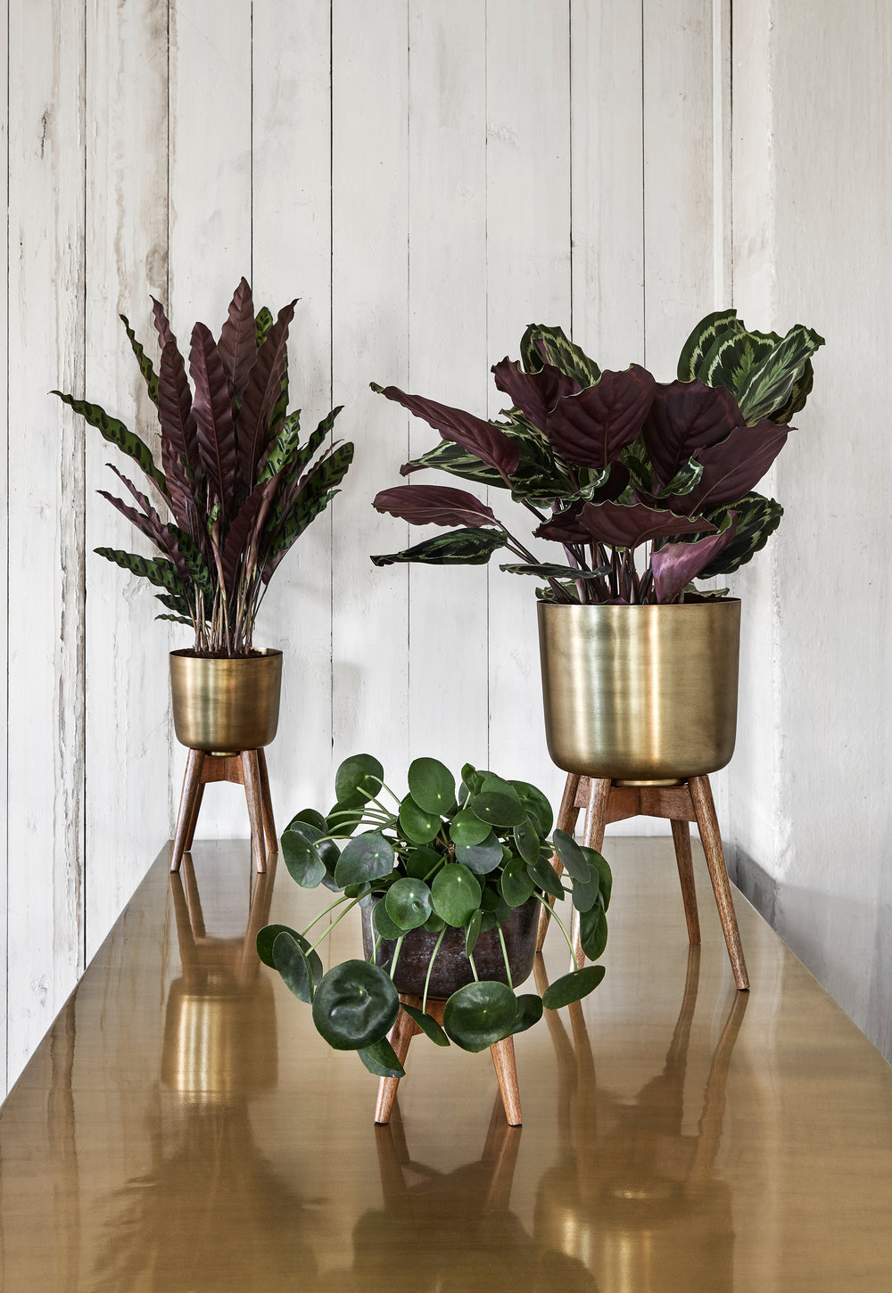 Audenza- Brass Planter with Stand Med- £78, Large £108. (2).jpg