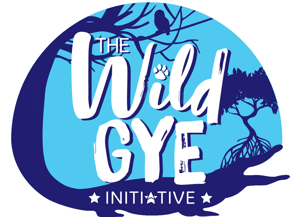 The Wild GYE Initiative , South America:  Producing an immersive audiovisual project on Guayaquil, Equador's  hidden natural and urban sites. Aimed to inspire and arouse interest to the nearly 3 million Guayaquileños and more than 500,000 foreign tourists who visit the city.