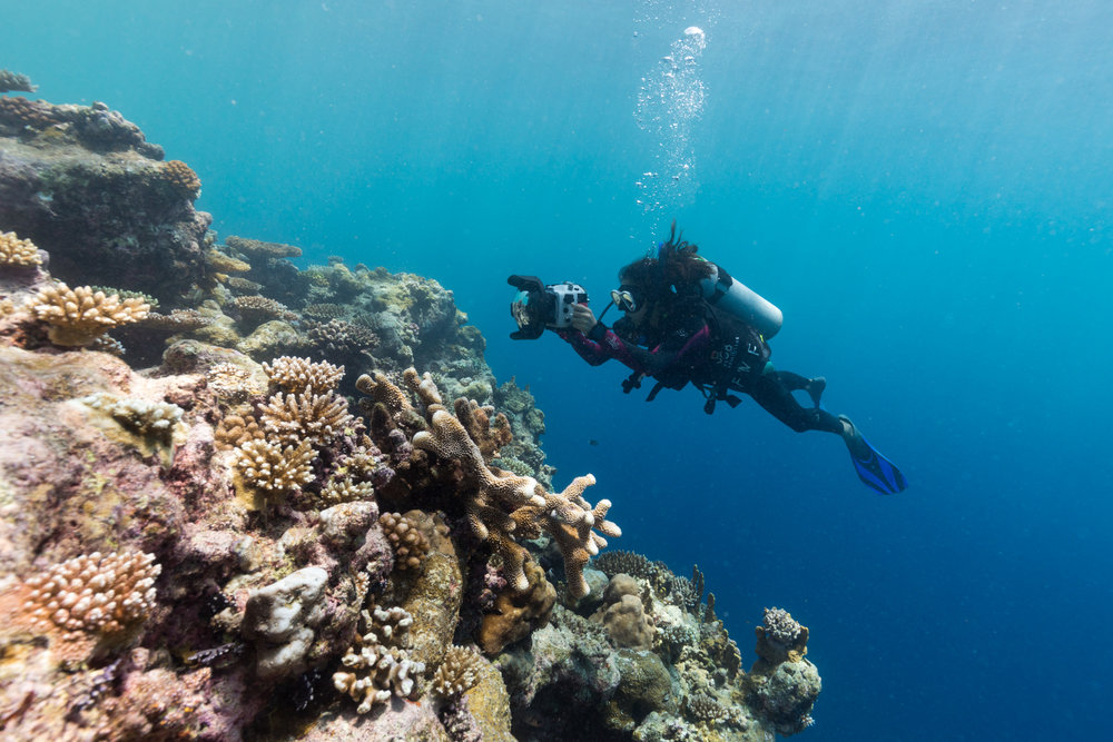 Palau has some of the most healthiest reefs in the world.