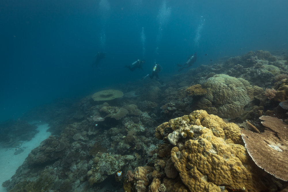 The visibility was a little less than we were hoping for, but the corals are clearly healthy.