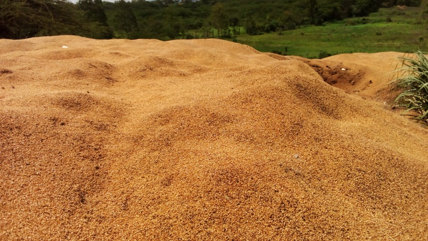 Biomass waste to be turned into pellets