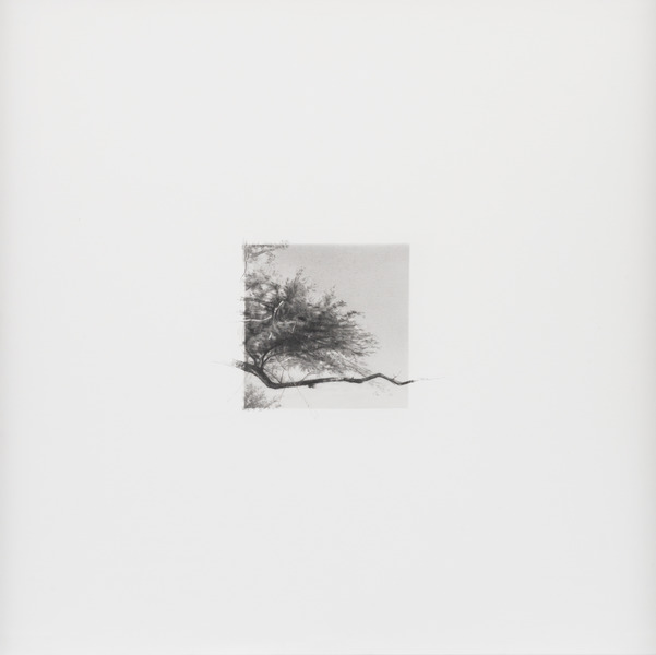 14 de diciembre de 2012, de la serie Diario (December 14th, 2012, from the series Diary). Graphite on paper. 15 3/4 x 15 3/4 in.