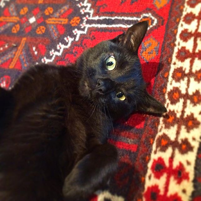 Apparently it's black cat appreciation day. Here's a cutie I met last year at an air bnb I stayed at in Bath with @gnomey_hayward . . . #blackcatappreciationday #blackcat #natcats #natcatcats #catstateofmind #ilovecats #felinefriday #felinefriends #catlove