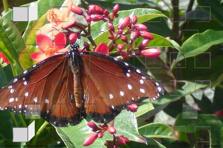 brownbutterfly_small.jpg