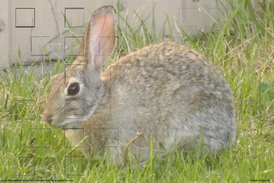 bunnyhorizontalsmall.jpg