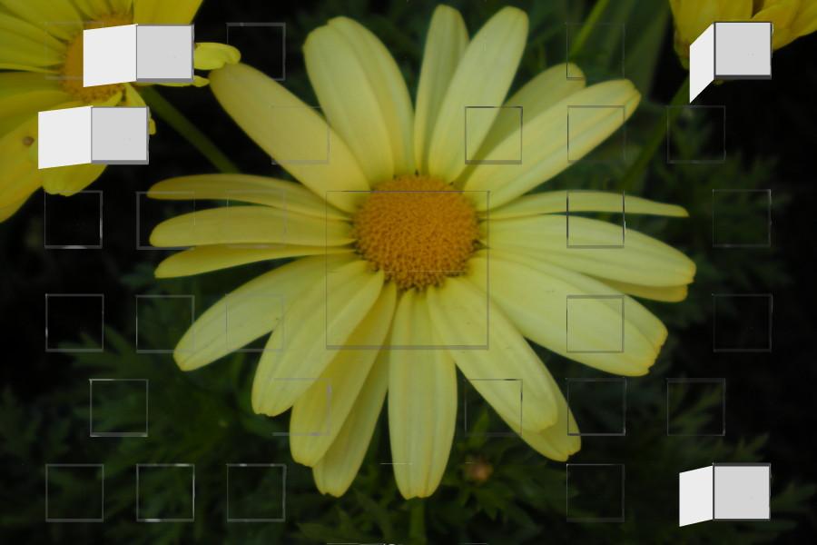 daisy_small.jpg